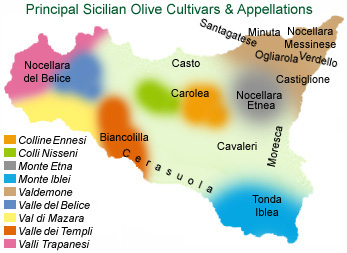 Principal olive cultivars by regional appellation.